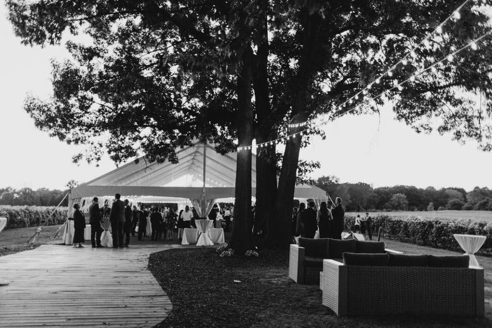 vineyard wedding tent